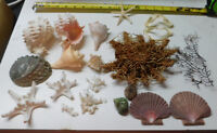 Mixed  Starfish, Dried Sea life Shells Craft collector Decor Lot # 39-L