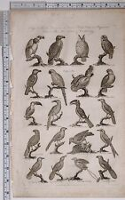c1795 ORIGINAL PRINT ORNITHOLOGY BIRDS PARROT TOUCAN HORNBILL OWL FALCON
