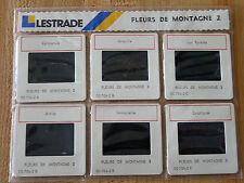 Original Lestrade Pack of 6 Fine Picks Slides Photos Mountain Flowers !