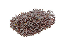 Authentic Mustard Seeds brown 40g. Spices, Free postage