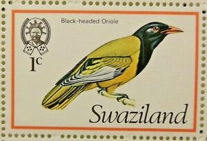 SWAZILAND 1976 SG236 1c. AFRICAN BLACK-HEADED ORIOLE -  MNH