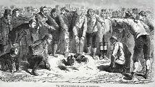 GRAVURE ANCIENNE 19e - UN COMBAT DE COQS EN ANGLETERRE