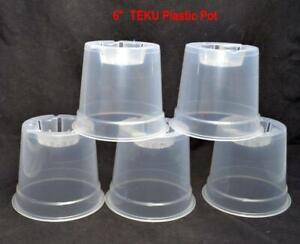 10 x 15cm DIAMETER   =  6 INCH, CLEAR PLASTIC ORCHID POTS  10 ORCHID PLANT POTS