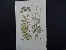 Sir John Hill, Botanical, The Vegetable System 1761-1775 Scabious S2#01