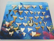 Lot of 35 Pathological Deformed Fossil Shark Teeth Assorted