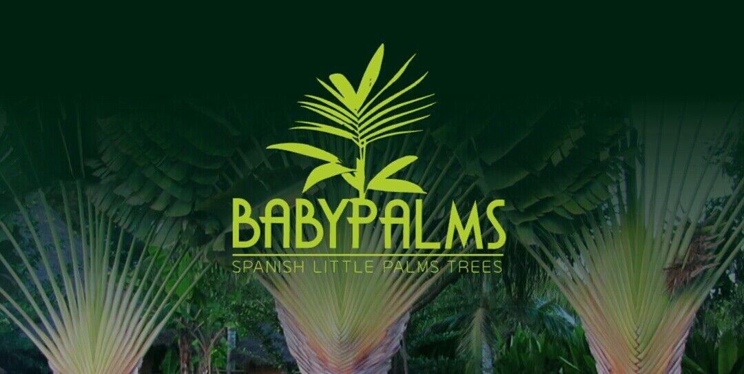 palmerasycycas