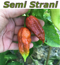 10 Pure Seeds BROWN BHUTLAH The Next Worlds Hottest Chili Pepper 1,8 Million SHU