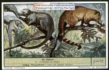 Kinkajous Honeybear and  Red Coati 50 Y/O Trade Ad Card