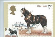 wbc. - GB - PHQ CARDS -1978 -  HORSES  - FRONT - FDI/SHS - COMP. SET. USED