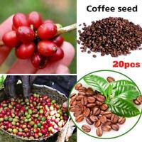 20 Coffee Bean Tree Seeds Mixed Perennial Rare Plant Home Garden Decor Bonsai