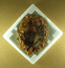 Eyes Of Autumn Season of the Wolf Plate #1 Collin Bogle Wolves 3D Mib Striking!
