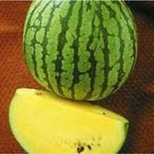 Watermelon Yellow Doll - Hybrid Great Garden Vegetable By Seed Kingdom 25 Seeds