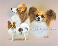 Papillon Multistudy Giclee Print by Robert J. May