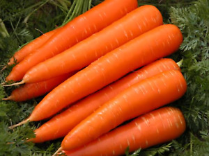 """Carrot Seeds """"All Seasons"""" (Approx 300 Seeds) Easy To Grow,Excellent Variety"""