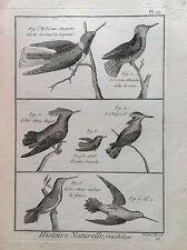 COLIBRI' CRESTED Benard 1790 HISTOIRE NATURELLE Ornithologie Vögel