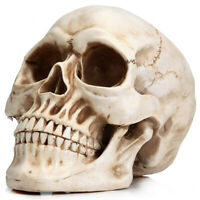 Life Size Realistic Human Skull Head Bone Model 1:1 Resin for Educational Tools
