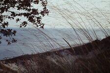 Ektachrome/Kodachrome 35mm Slides Dune Ecology Michigin 1962