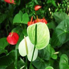 POTTING  BLEND FOR ANTHURIUM PLANTS(Flamingo Flr.)ORGANIC 20 Qts. - PsNature