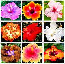 100 PCS Seeds Hibiscus 24 Colors Hawaii Bonsai Potted Plants Home Garden Flowers