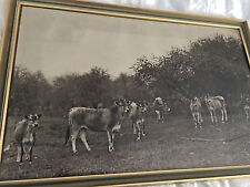 Vintage Framed Picture of Jersey Cow Pasture 1940's Black & White Country Farm