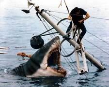 Jaws Movie Great White Shark 8x10 Photo 001
