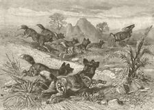 DOGS. Hunting-dogs chasing gemsbok 1893 old antique vintage print picture