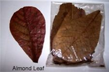 50 g. PREMIUM Indian Almond Leaves Fish Splendens Tropical Health Benefits