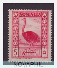 SOMALIA  AFIS  1950 -  SOGGETTI AFRICANI   Cent 5 NUOVO **