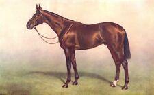 "HORSES. Thoroughbred Stallion-""Lviv"". Derby Winner, 1910 1912 old print"