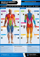 MUSCLE GROUPS AND EXERCISES Professional Fitness PosterFit Poster w/QR Code
