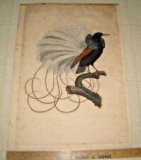 JACQUES BARRABAND ANTIQUE CIRCA 1802 BIRDS OF PARADISE PRINT / ENGRAVING / BIRD