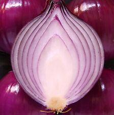 Oignon-red baron [summer bulbing] - 1000 graines [... the award winning oignon rouge]