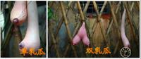 Vietnam Gourd Bonsai Hanging Breasts Melon Vegetable Plants Garden 10 Pcs Seeds