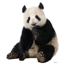 GIANT PANDA BEAR China Lifesize CARDBOARD CUTOUT Standee Standup Poster Prop