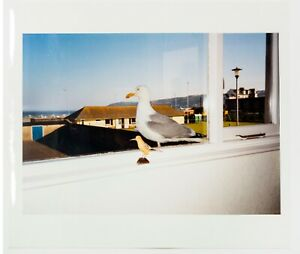 Mona Hatoum: Birds of a Feather, 1997, Signed, Numbered, Fine Art C-Print