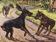 DOBERMAN PINSCHER DOGS PLAYING WITH A BROOM DOG GREETINGS NOTE CARD