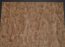 Eucalyptus Burl Raw Wood Veneer Sheet 105 X 14 Inches 142nd 7655 12