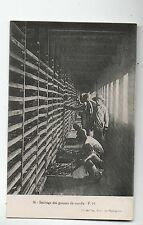 Carte postale MADAGASCAR. Séchage des gousses de vanille. Dos vert
