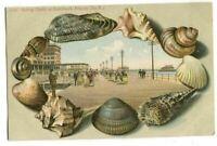 Postcard Seashell Border Rolling Chairs Boardwalk Atlantic City NJ