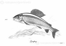GRAYLING Thymallus Thymallus Signed Robin Woolnough Fishing Art Drawing Print
