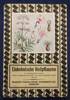 Einheimische Heilpflanzen großes Blatt mit Abbildungen und Tabelle um 1930 sf