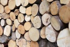 Kiln Dried Decorative Display Hardwood round logs - Collection Only