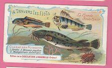 Chocolaterie d'Aiguebelle - Le Monde sous-marin - Girelle - Malaptérure