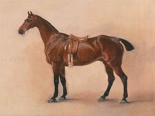 PAINTING ANIMAL HORSE FERNELEY STUDY SADDLED BAY HUNTER ART PRINT LAH440A