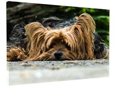 CUTE YORKSHIRE TERRIER CANVAS PICTURE PRINT WALL ART CHUNKY FRAME LARGE 1784-2