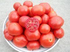 Mr. Bruno Tomato Seeds- Rare Australian Heirloom Variety- 40+ 2017 Seeds
