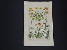 Sir John Hill, Botanical, The Vegetable System 1761-1775 Seggram #04