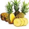 Pineapple Bonsai Juicy Fruit Bonsai Exotic Potted Plants Garden G 100 Pcs Seeds