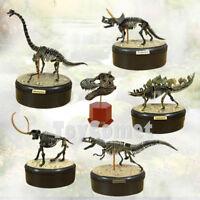 Full Set of 6 Dino Dinosaur Skeleton Fossil 4D 3D Puzzle Model Kit Toy