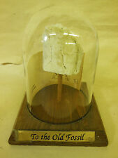 old Titanothere Fossil on Stand under Glass Dome from Montana 1991